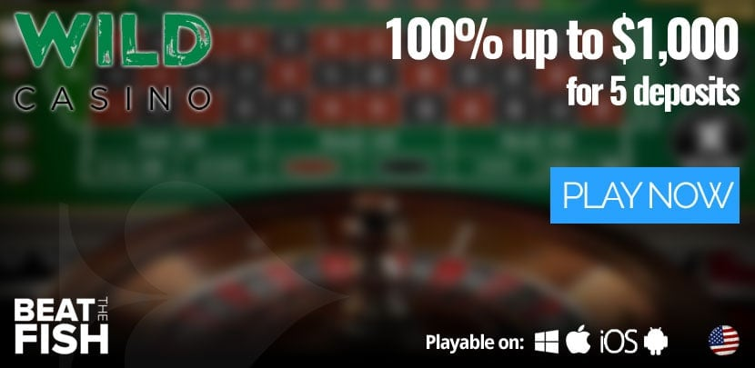 Play at Wild Casino Now